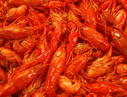 What does Crawfish Taste Like?