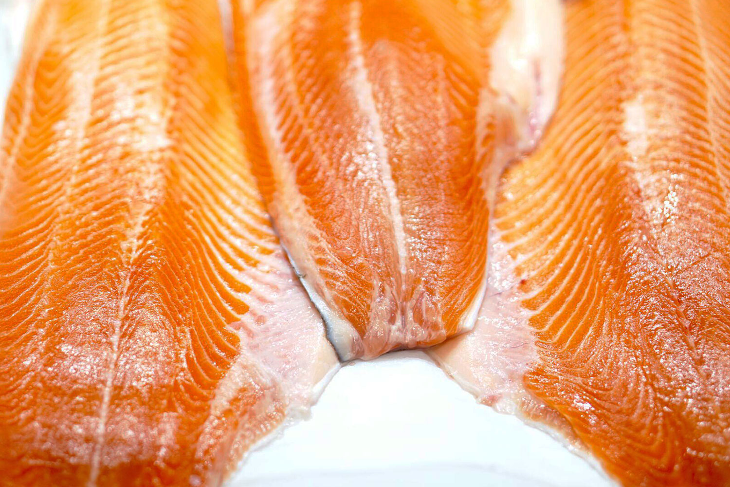 how to cook coho salmon