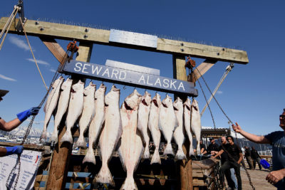 Halibut shipped from alaska
