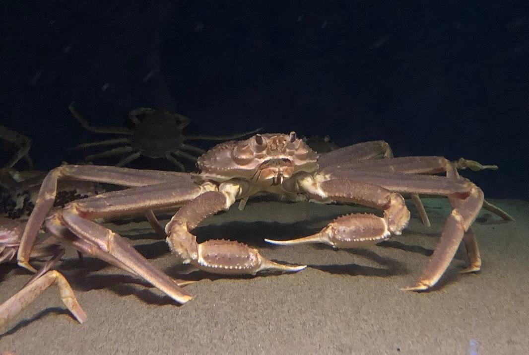 snow crab legs price