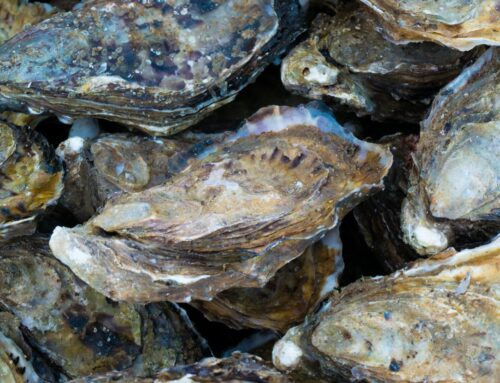 Buy Oysters Online from These Top Retailers