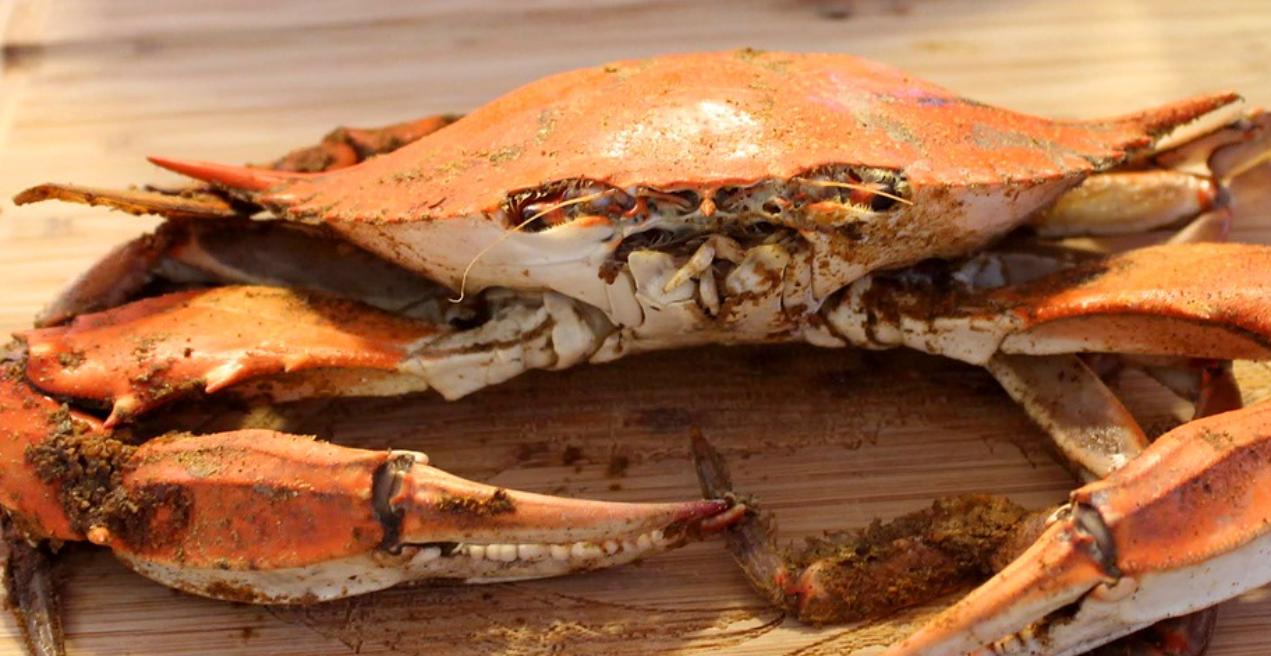 order maryland blue crab online